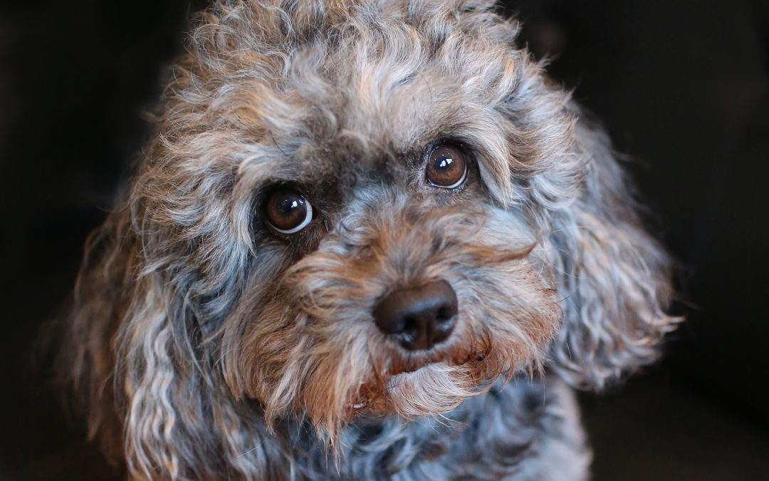 Photographing Your Pet Dog